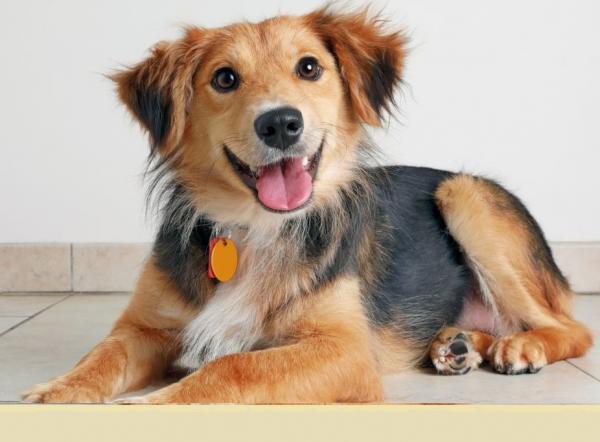 Hromadné očkovanie psov sa v tomto roku neuskutoční