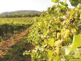 Deň vo vinohradoch 10.9.2016