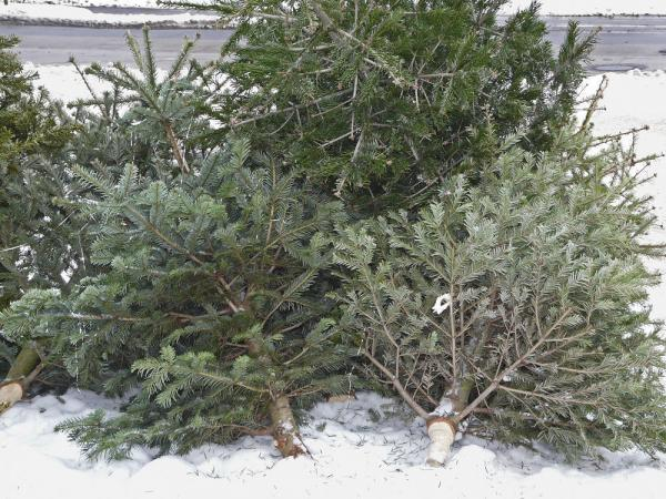 Neviete čo s vianočným stromčekom? Zber začína od 7. januára 2021
