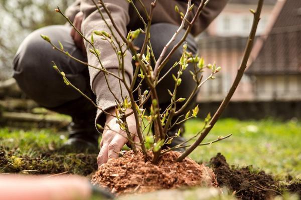 Výsadba stromov na Vajnorských jazerách